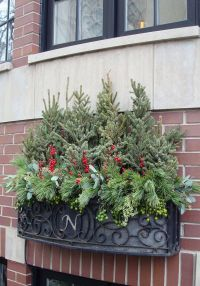 winter, decor, window box, spruce tops, evergreens, urban ...