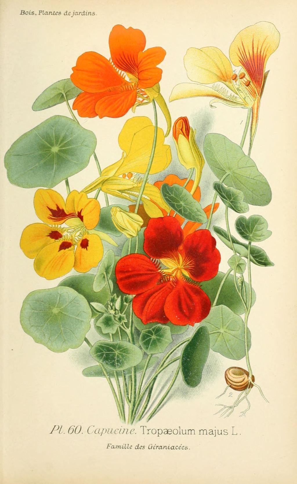 Dessin jardin fleuri 8 bordures pratiques et charmantes - Coloriage fleur capucine ...