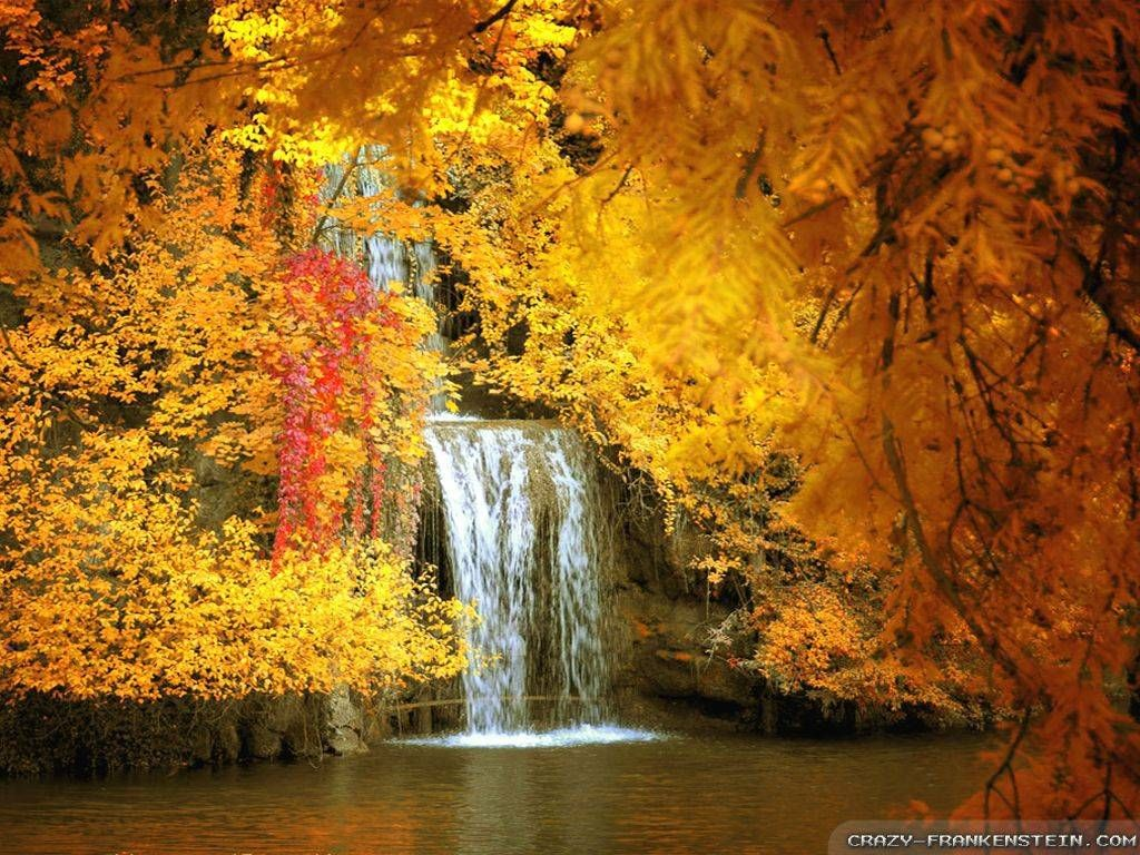Falling Leaves Wallpaper Screensavers Beautiful And Amazing Photos Beautiful Autumn Amazing