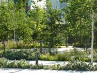 Intensive Roof Garden   Flowers, Plants, Gardens, Nature ...