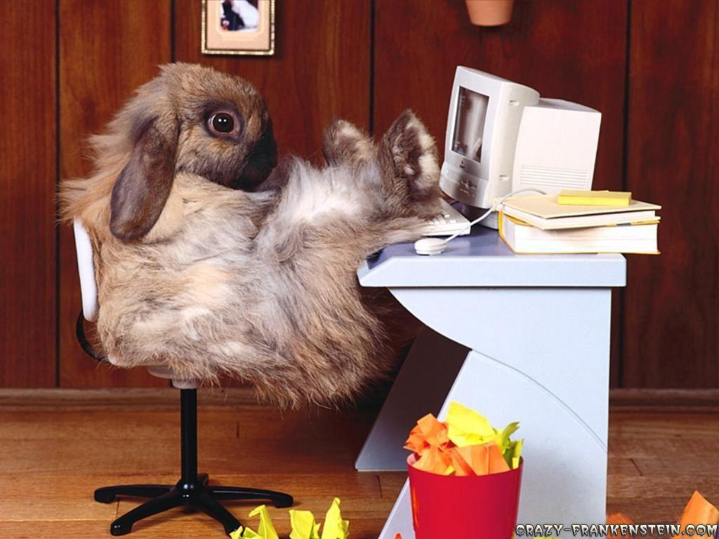 Au secours mon budget prend l eau hard daysdays infunny bunniescute bunnya
