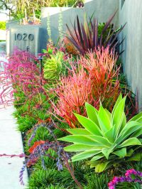 Create a drought-friendly landscape. (Originally featured ...