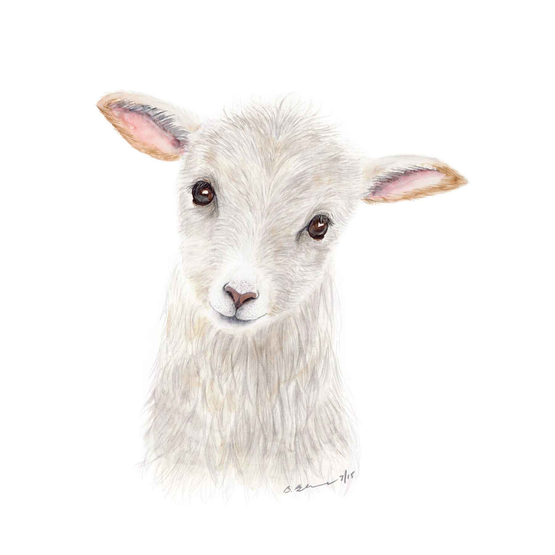 Baby Lamb Drawing Baby Lamb Portrait Baby Lamb White Nursery And Lambs
