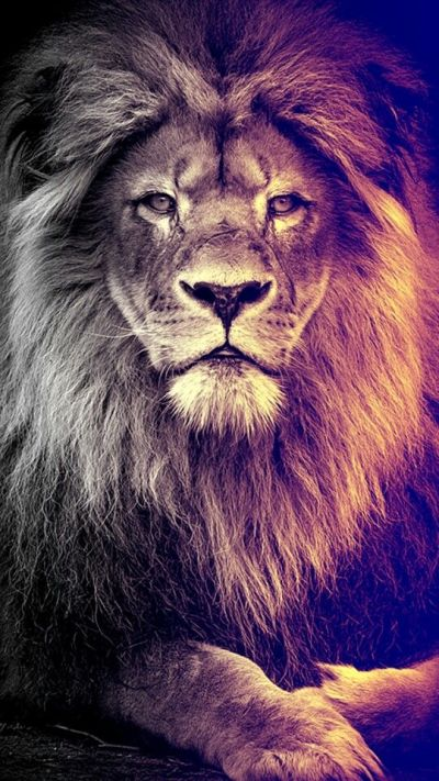 Best 25+ Lion wallpaper ideas on Pinterest | Lion wallpaper iphone, Lion live wallpaper and King