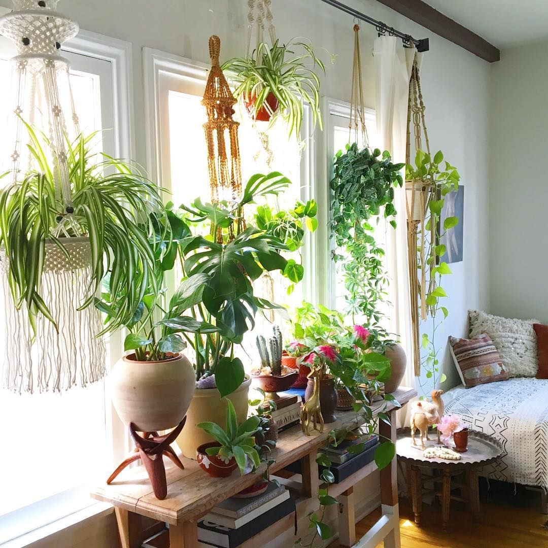 Plants Home Decor Christina Eneses Meneses75 Instagram Photos And