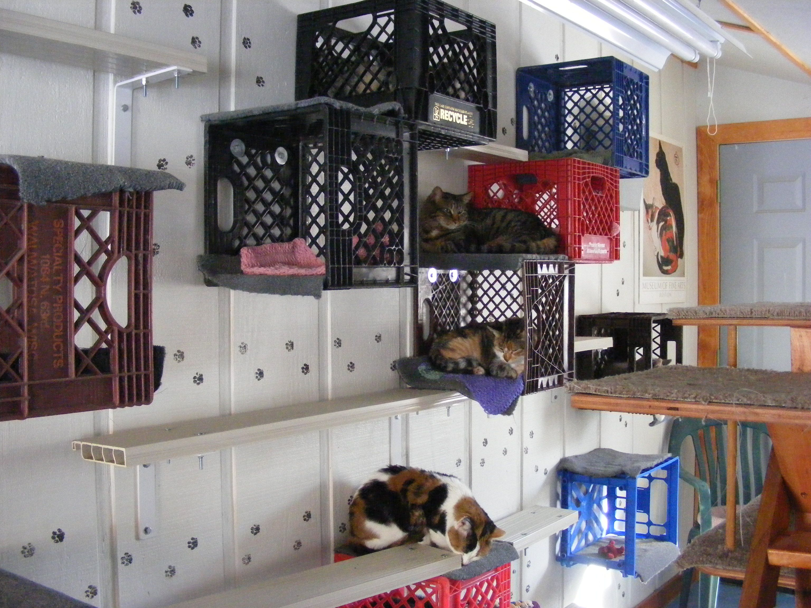 Nice Cat Furniture Tour The Cat Room Crates Cat Beds And Nice