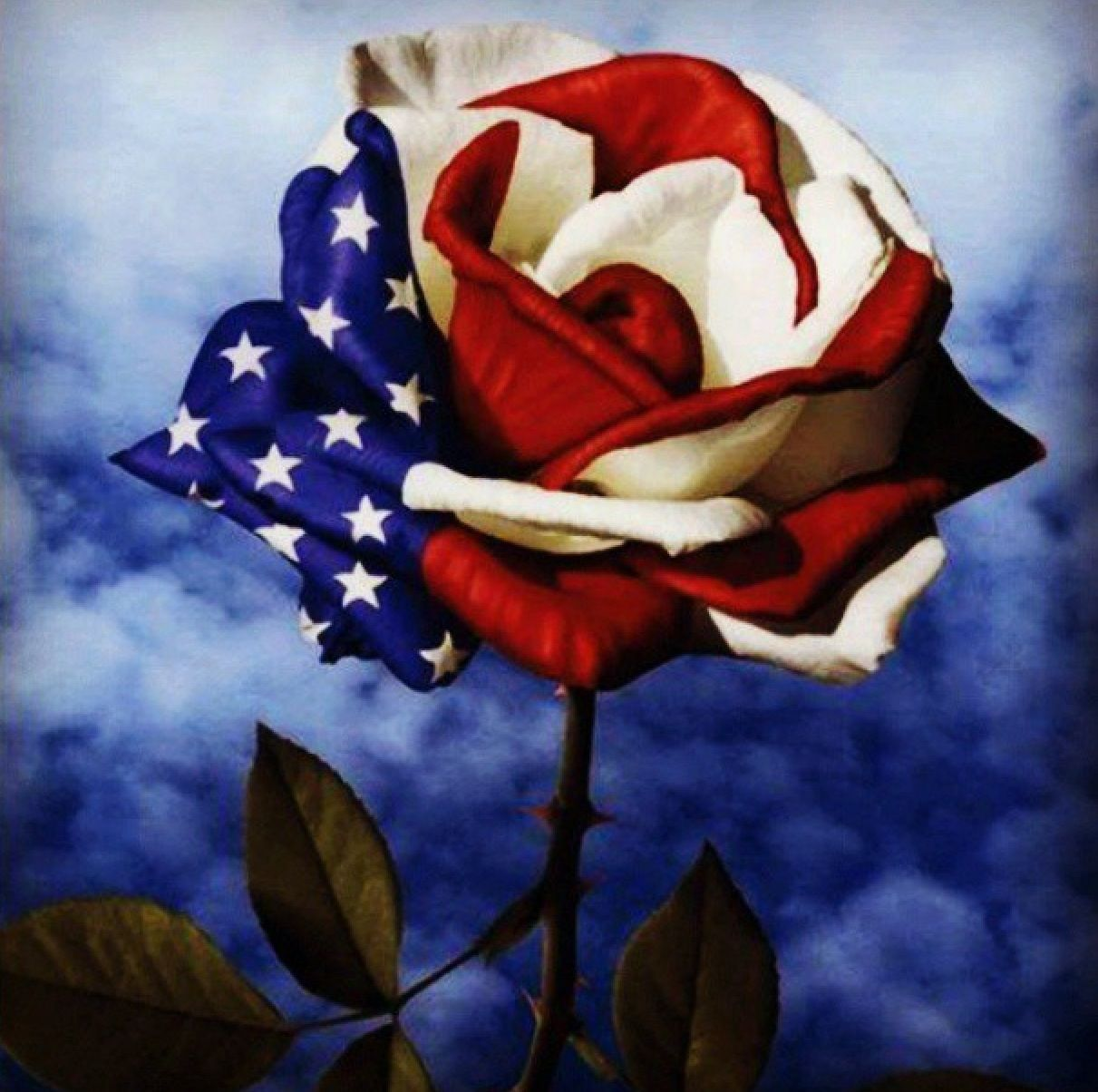 Divided We Fall Wallpaper Red White And Blue Rose A Thing Of Beauty Pinterest