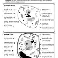 Animal and Plant Cells Worksheet | Plant cell, Worksheets ...