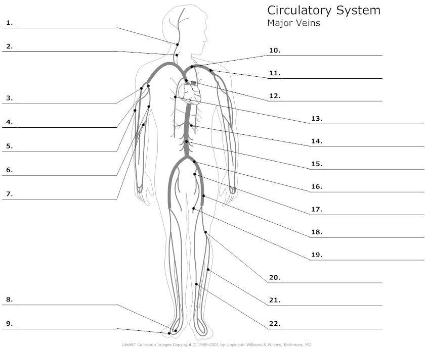 pin picture diagram of human body arteries and veins on pinterest
