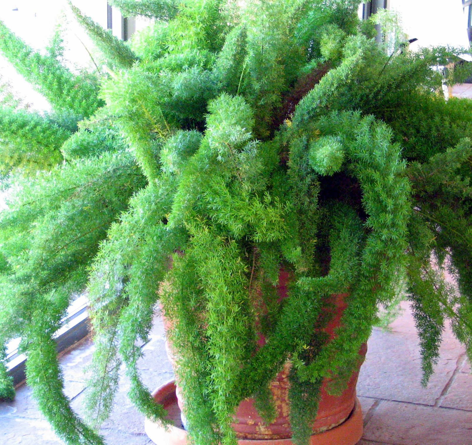 Large Indoor House Plants For Sale Low Light Houseplant Google Search Houseplants Love