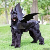 Pick: Big Batty Dog Of The Day