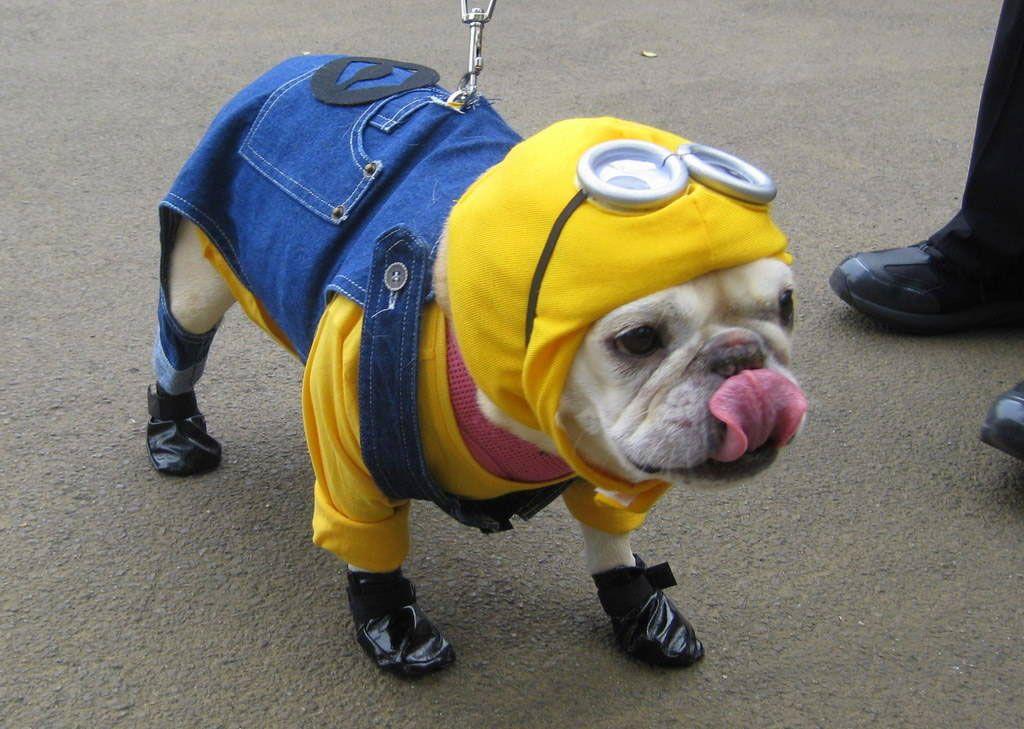 Minion Small Dog Halloween Costumes