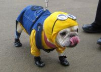 Minion Small Dog Halloween Costumes | Cute Dog Costumes ...