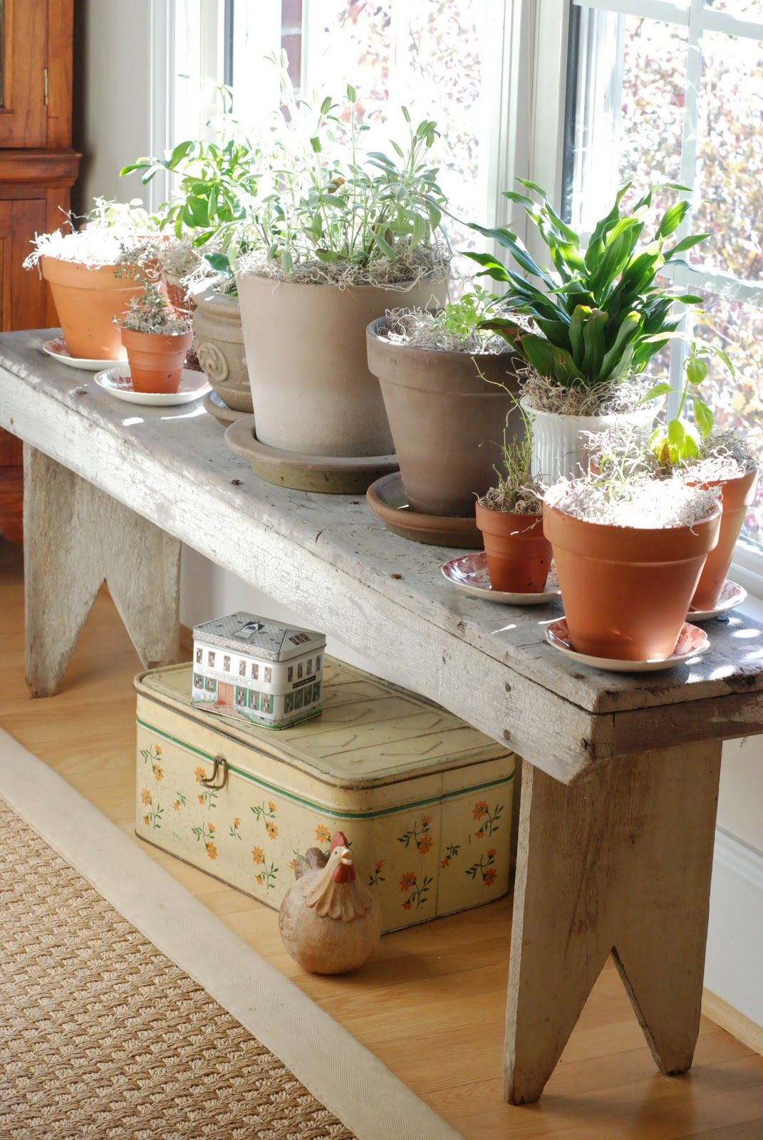 Plant Bench Indoor I Would Love This In Our Home Indoor Garden In The