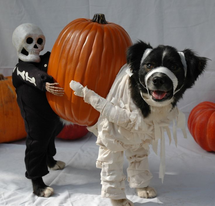 These 30 Halloween Dog Costumes Will Put A Smile On Your