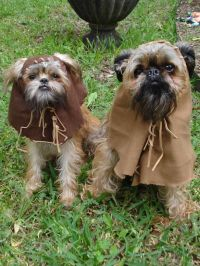 Ewok Dog Costume on Pinterest