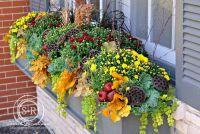 Serendipity Refined Blog: Fall Window Box Planter ...