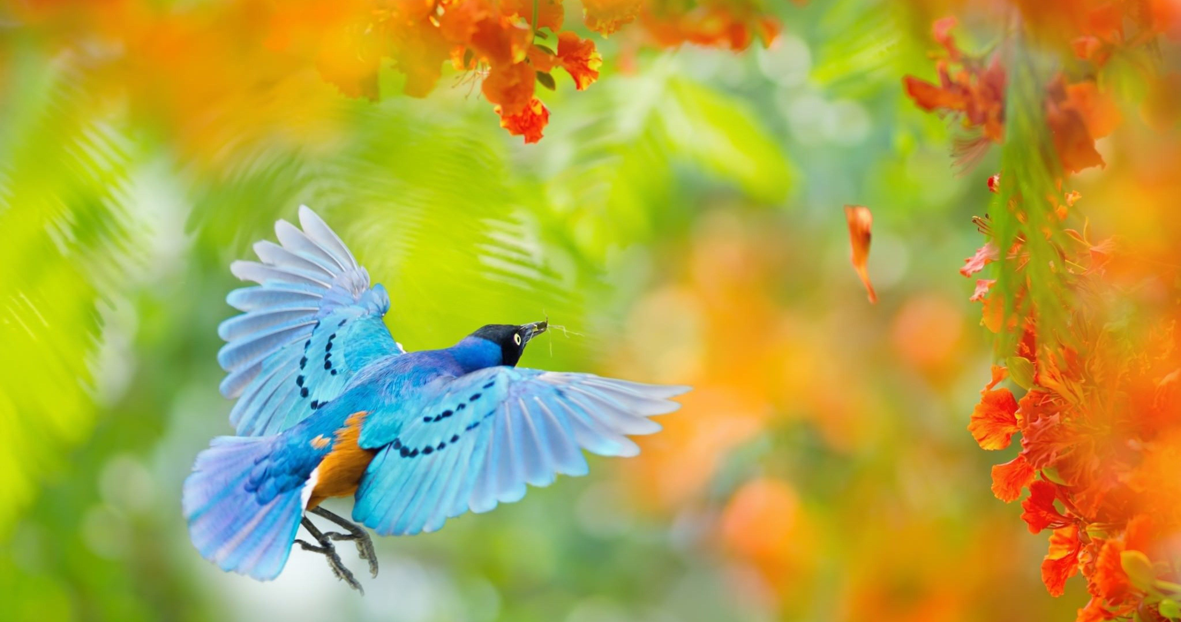 The Yellow Wallpaper Meaningful Quotes Flying Bird In Africa 4k Ultra Hd Wallpaper Ololoshenka
