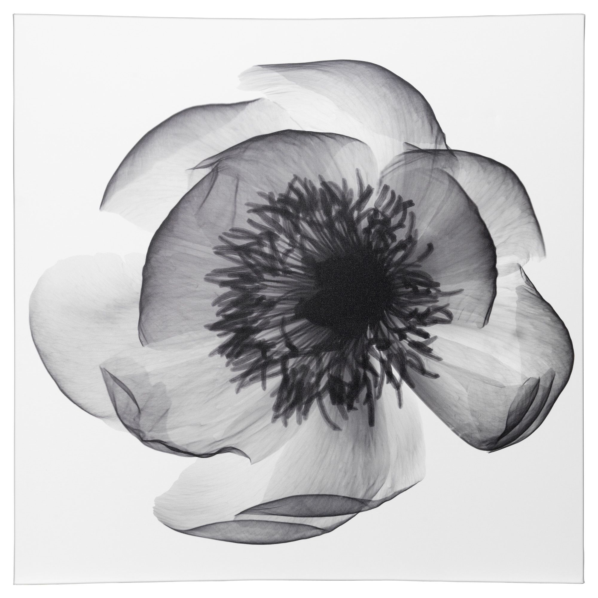 Xray Flower Prints KlÖxhult Picture Ikea 39 99 Covet Pinterest