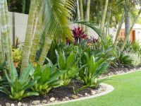 Tropical Patio Plants RED | Tropical Garden Border Stock ...