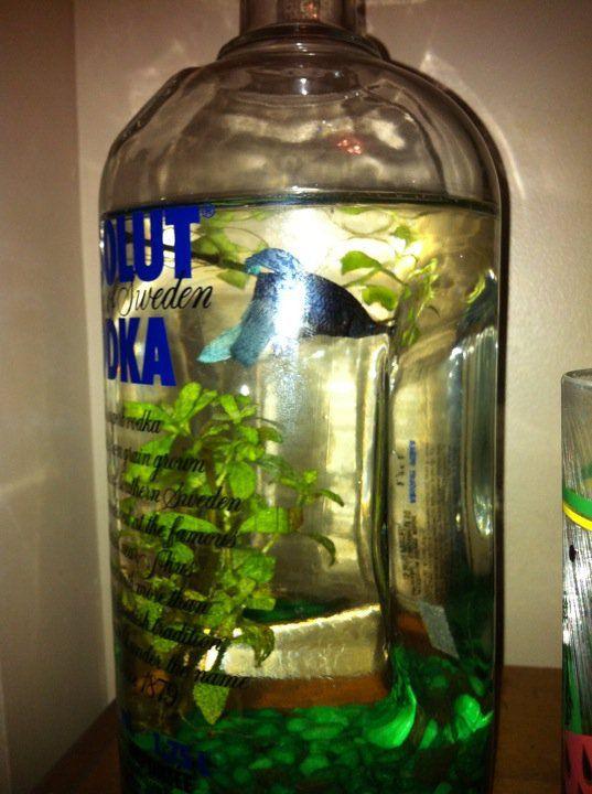 Tanks on Pinterest by lindastarz | Betta, Fish Tanks and Betta Fish