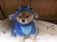 Dog stitch onesie! SOOOOOOOOOOOOOOO CUTE ...