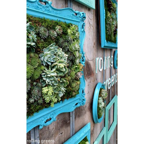 Medium Crop Of Succulent Hanging Garden