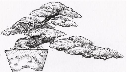 wiring bonsai into semi cascading style