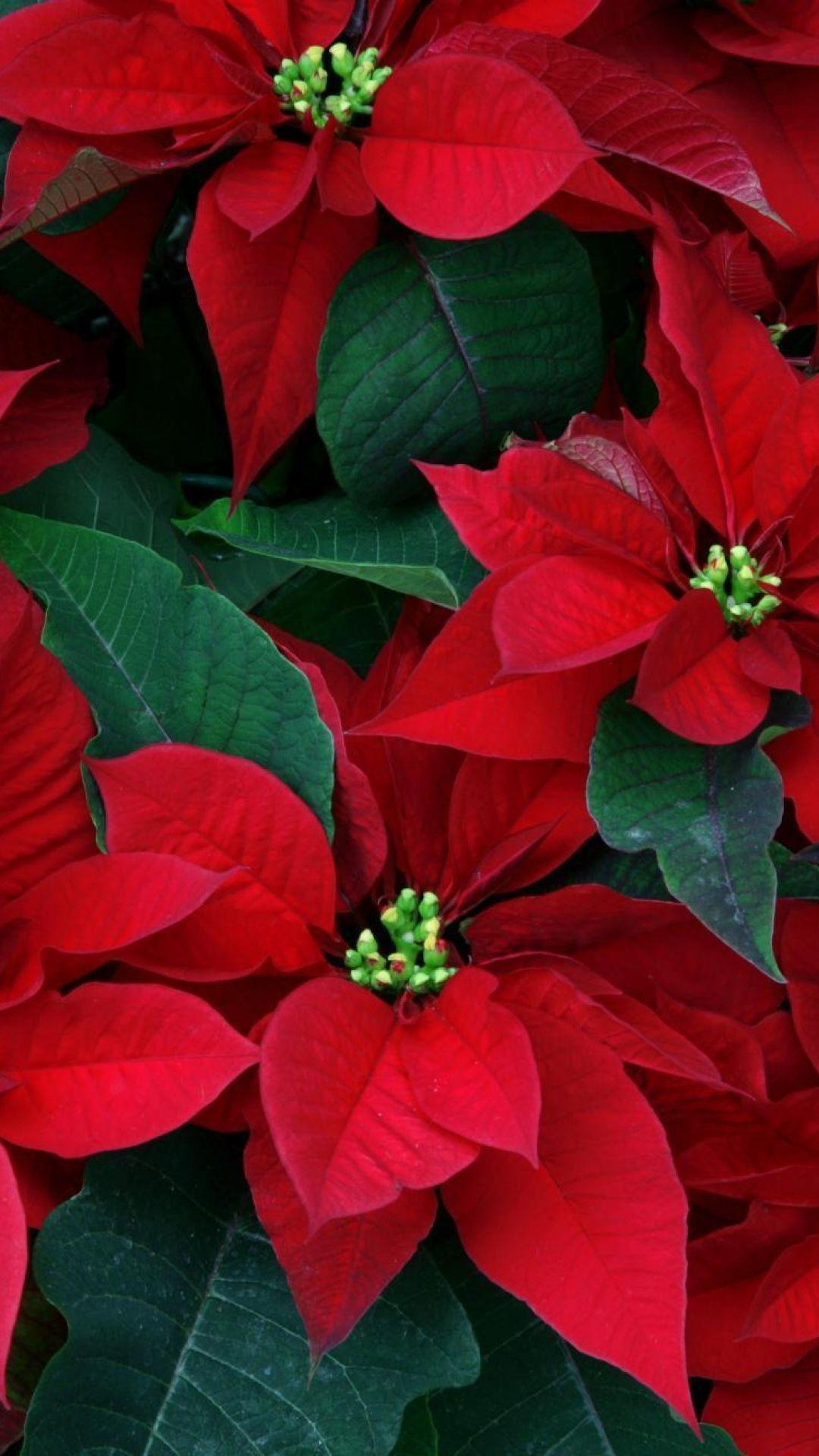 3d Xmas Tree Live Wallpaper Best 25 Poinsettia Ideas On Pinterest Christmas Felt