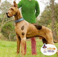Scooby doo Dnde ests? . #halloween #disfraces #dog # ...