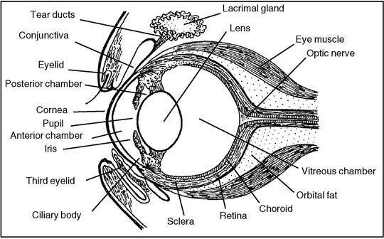 google eye diagram