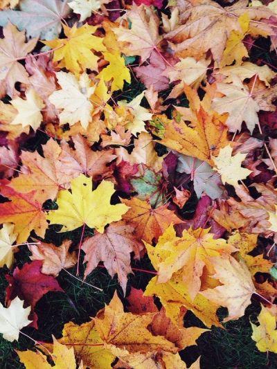 JohanFredrikson | VSCO Grid | Season | autumn. | Pinterest | Autumn, Photography and Leaves