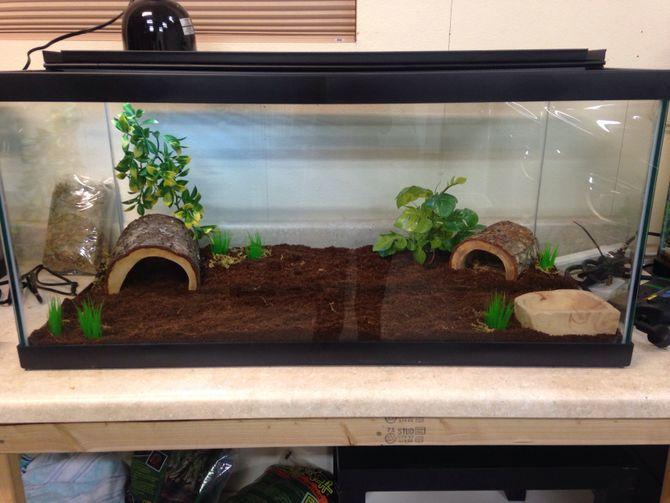 Cute Leopard Gecko Wallpaper Create A Corn Snake Vivarium Corn Snake Vivarium And Snake