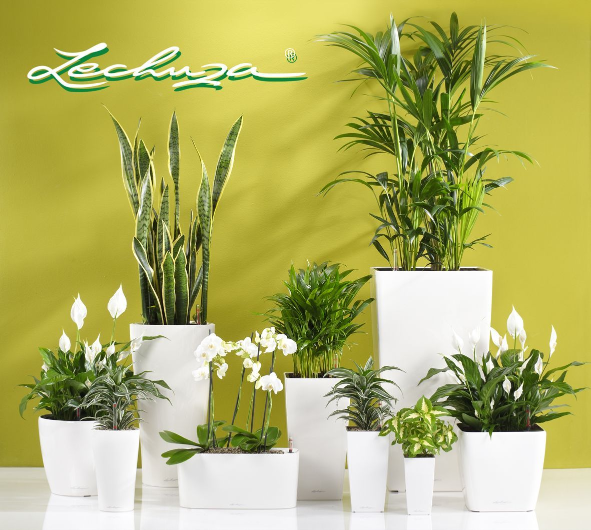 Self Watering Outdoor Planters Self Watering Planter Yes Lechuza Planters Exclusively