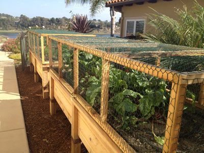 Raised Garden Bed With Hinged Wire Cover To Keep Critters Edible - raised bed garden designs