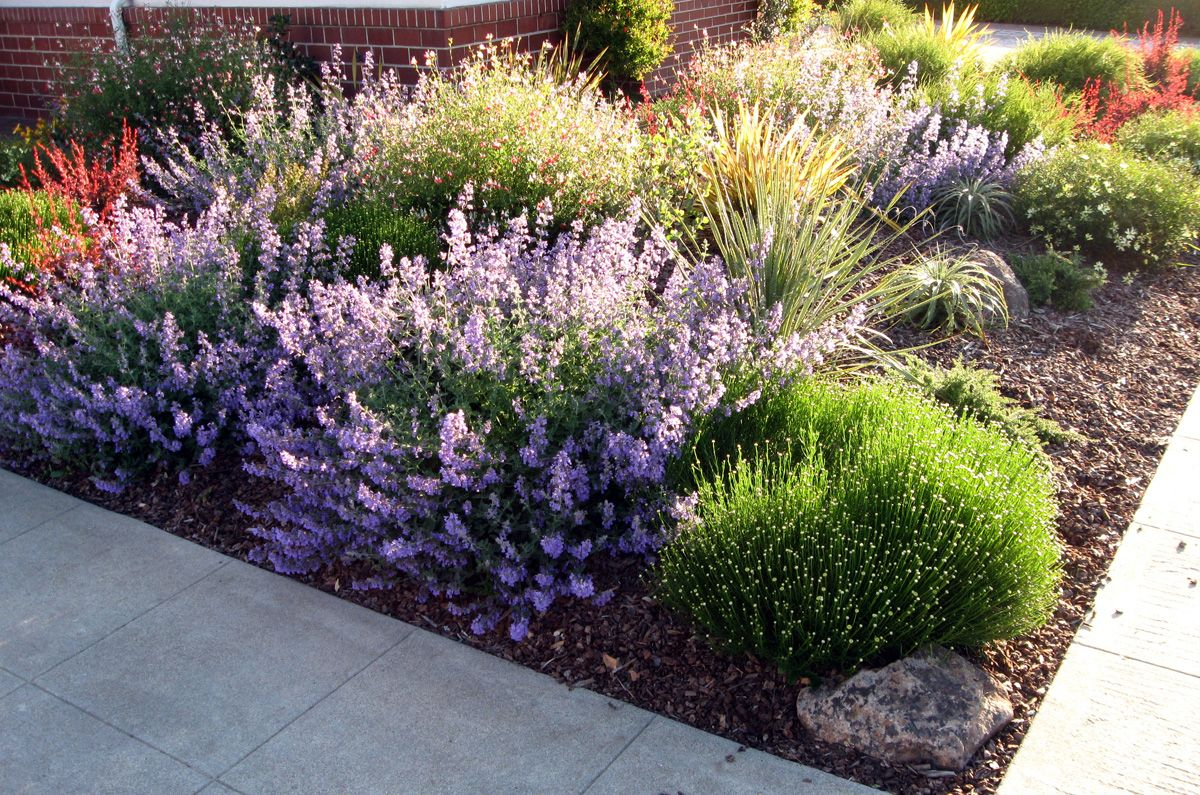 Front Yard Landscaping Photos Low Water Front Yard Landscaping Ideas