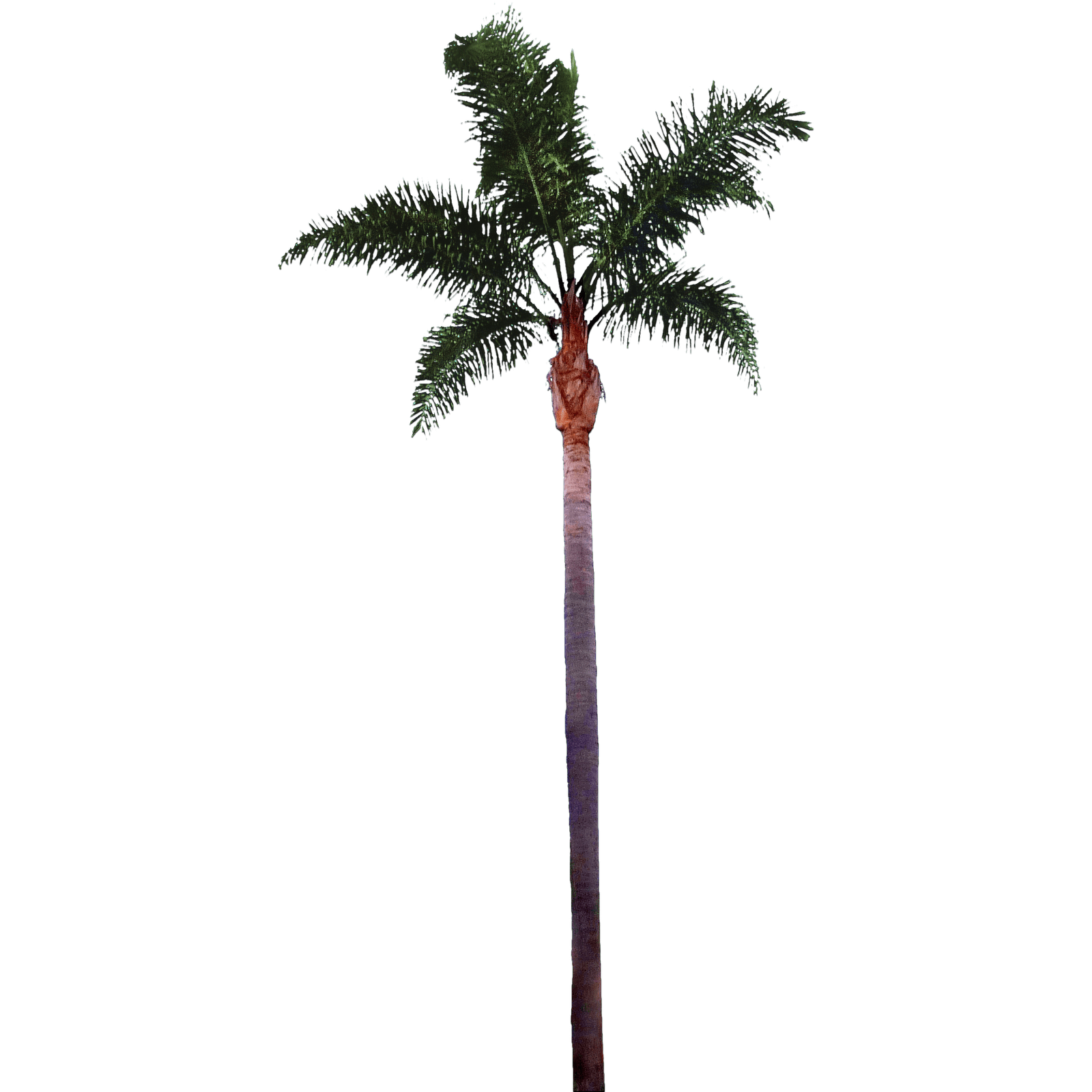 Palm Tree Top View Png Palm 43tree2 Png 16001600 Cool Tropical Pinterest