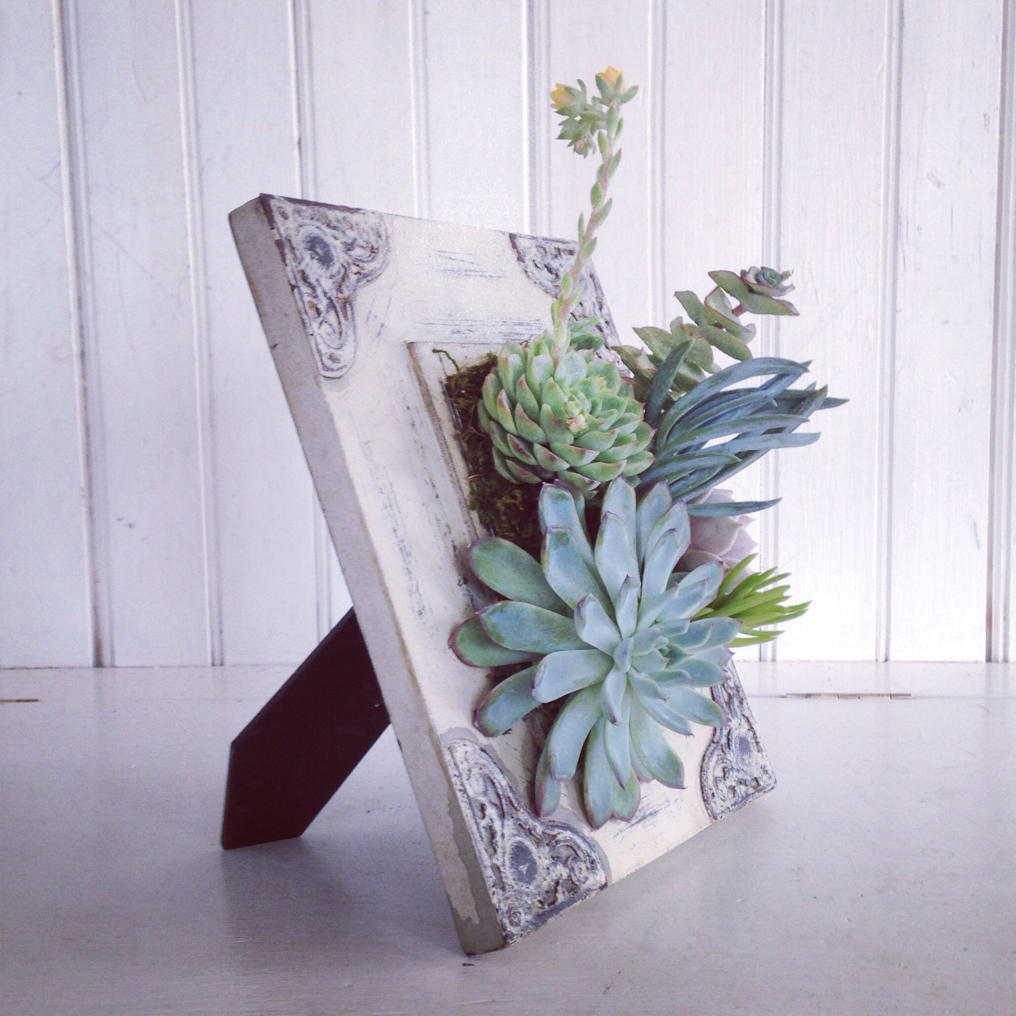 Cactus Pots For Sale Fun Way To Bring Succulents Into Your Home Decorating