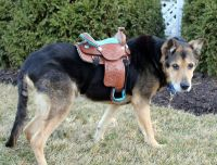"6"" Western Horse Saddle for Display or Dog Costume - 3 ..."