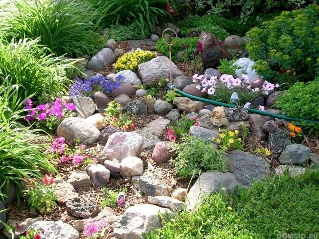steingarten gestaltungsideen petunien veilchen mulch - gartengestaltung steingarten