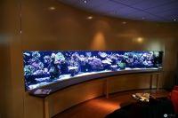 Office entrance aquarium Idea | Office Ideas | Pinterest ...