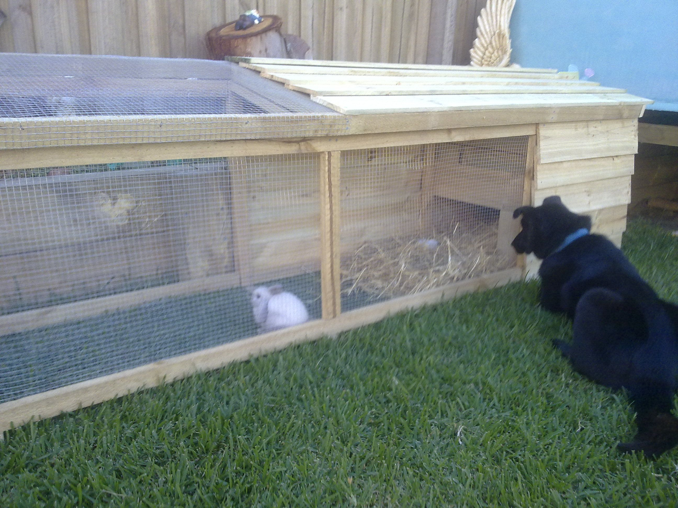 Diy Cage For Rabbit Bing Image Like The Idea For A Bunny Run Better For Them