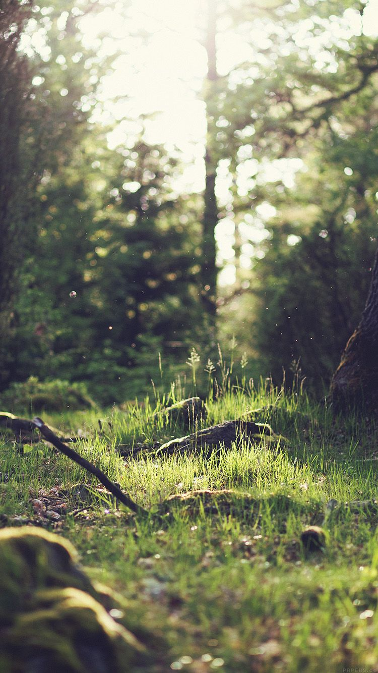 Free stock photo of wood nature sunny forest