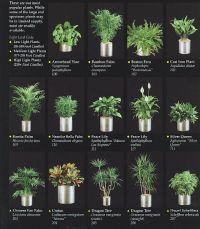indoor plants for an office | Desktop Decor | Pinterest ...