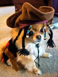 Jack Sparrow Dog Costume | Hot-Diggidi-Dog! | Pinterest ...