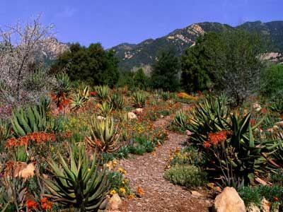 1000+ Images About Desert Gardening Ideas On Pinterest | Gardens