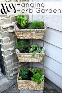 DIY Hanging Herb Garden | Herbs garden, Small spaces and Herbs