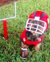 53 of the Cutest Halloween Costumes for Dogs   Small dog ...