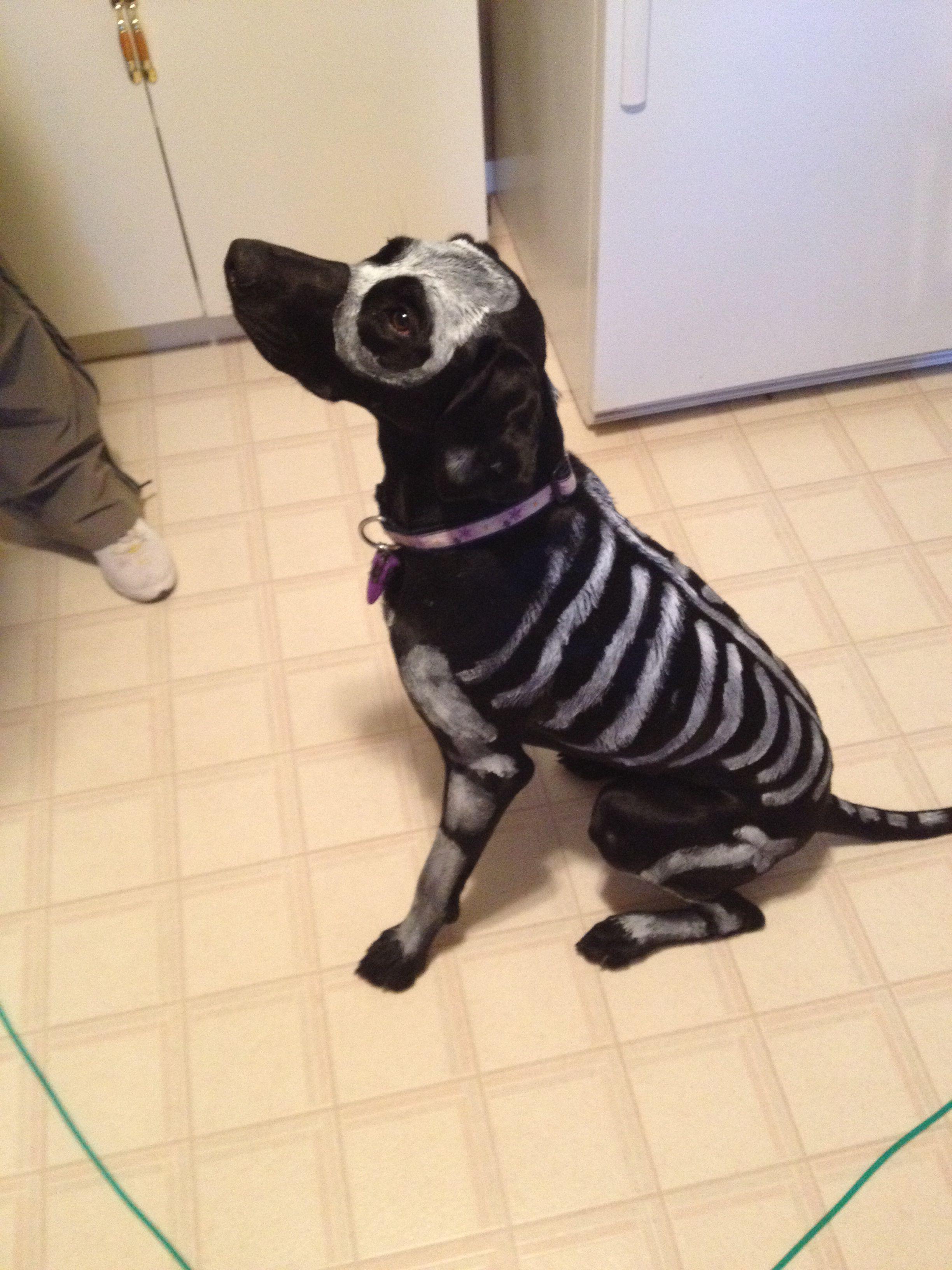 Skeleton Dog! Non