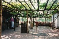 Grapevine shading on a Trellis -- colonial Williamsburg ...